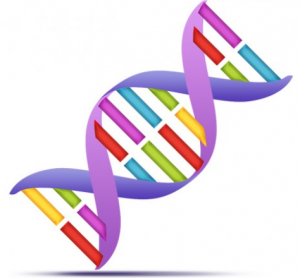 ... Et protège l'ADN